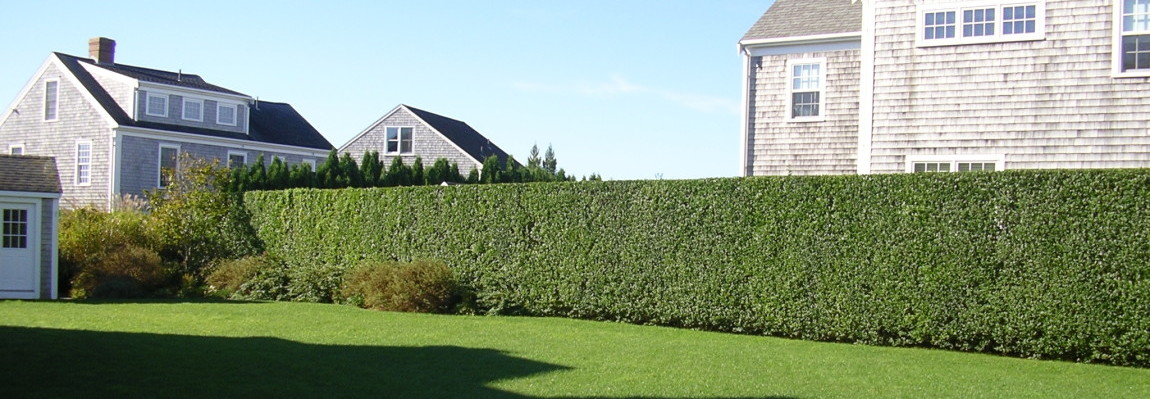 Hedge & Bush Trimming
